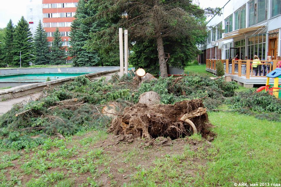 Вечером 23 мая 2013 года порывами штормового ветра было повалено дерево, находившееся справа от входа в ресторан «Бьянко Россо»
