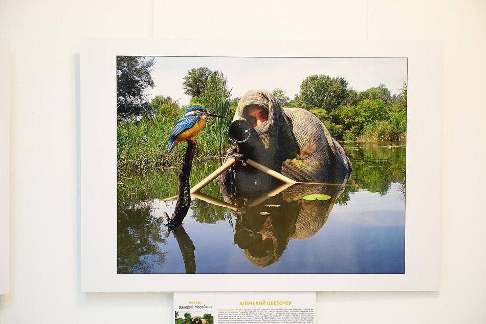«Золотая черепаха» снова в Обнинске