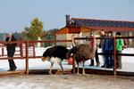 Экскурсия в «Парк птиц» (в рамках акции ОМЦ)