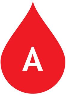 Вторая группа крови