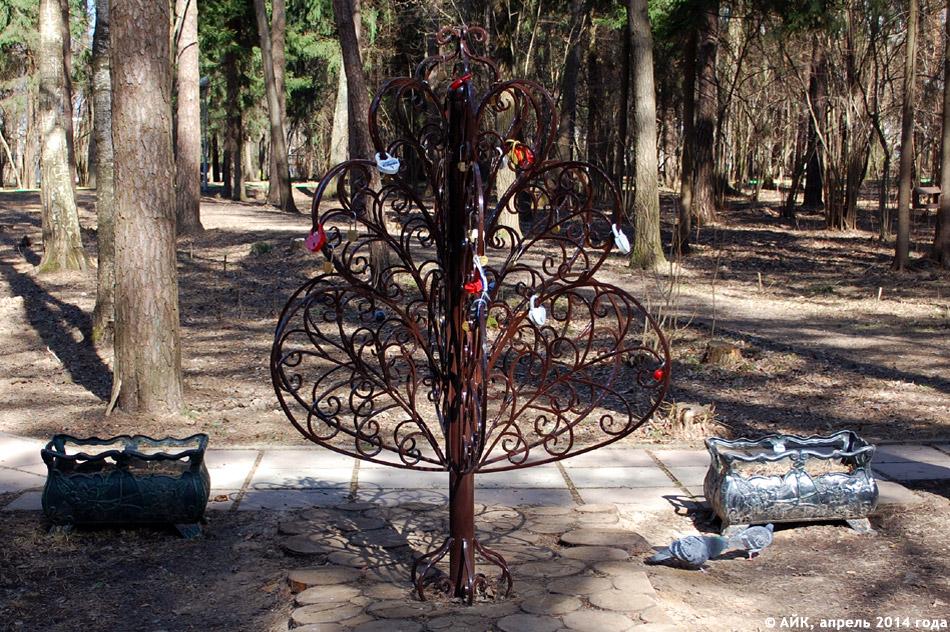 Дерево любви и согласия в городе Обнинске