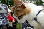 Фестиваль беспородных животных «Доброе сердце» (2012 год) в городе Обнинске
