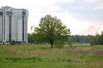 Дуб на поляне перед «Домом Учёных» в городе Обнинске