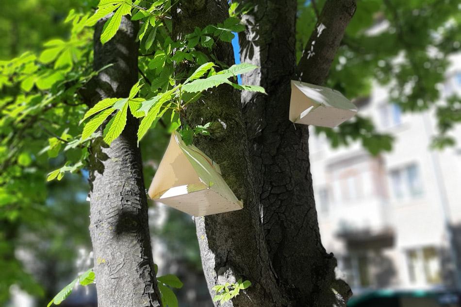 Феромонные ловушки на улице Курчатова в городе Обнинске