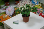 Салон цветов «Ромашка» в городе Обнинске