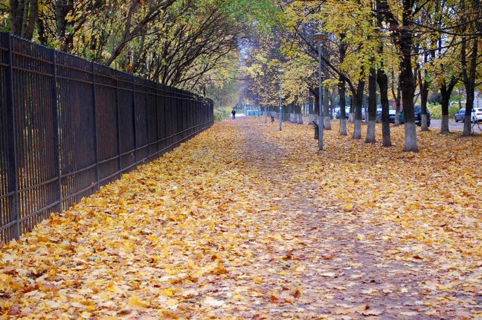 Улица Звёздная в городе Обнинске (октябрь 2016 года)