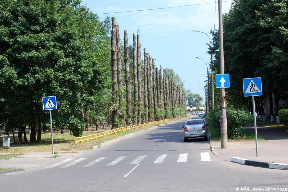 Вырубка опасного сухостоя на улице Жолио-Кюри в городе Обнинске