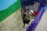 Контактный зоопарк «Мой маленький мир» в городе Обнинске